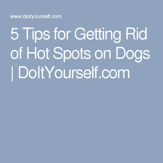 Treating Hotspots On Dogs With Tea Tree Oil