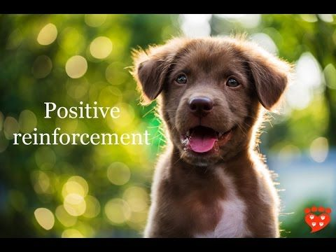 How to implement Positive Reinforcement Dog Training Tips