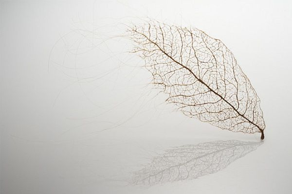 Jenine Shereos #art #design #leaf