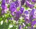 Shade Garden -10 shade tolerant plants