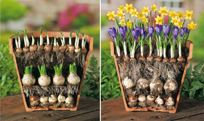 How to plant flower bulbs:                                Taking advantage of...