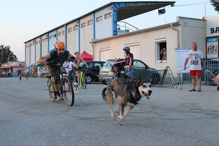 Kostka kolobežky DogFest 2015