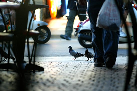 This picture captured my interest because out of everything that could have been in focus, the objects in focus are the pigeons. I found this to be an interesting take on street photography.