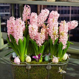 Martha Stewart Flowering Bulb Arrangement