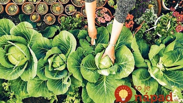 Chcete mať krásne kvety a bohatú úrodu? Všetko, čo potrebujete nájdete vo vašej kuchyni!