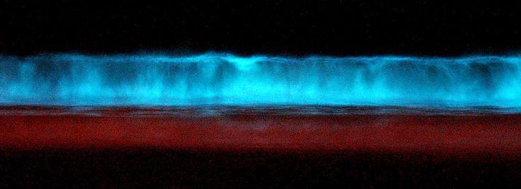 30 raros e deslumbrantes fenômenos naturais: Dinoflagelados bioluminescentes em condições adequadas criam a assustadora maré vermelha.