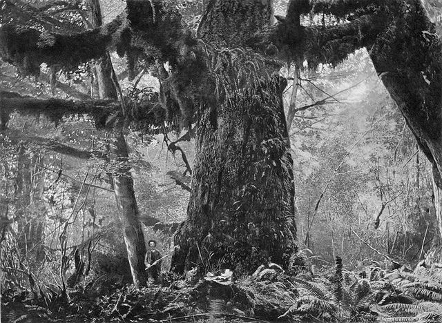 A man standing near the base of a giant tree, Stanley Park, Vancouver, British Columbia, c. 1892. #vintage #Canada #Victorian
