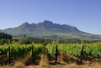 the Helderberg( clear mountain) in Stellenbosch