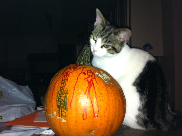 The cat and the pumpkin...