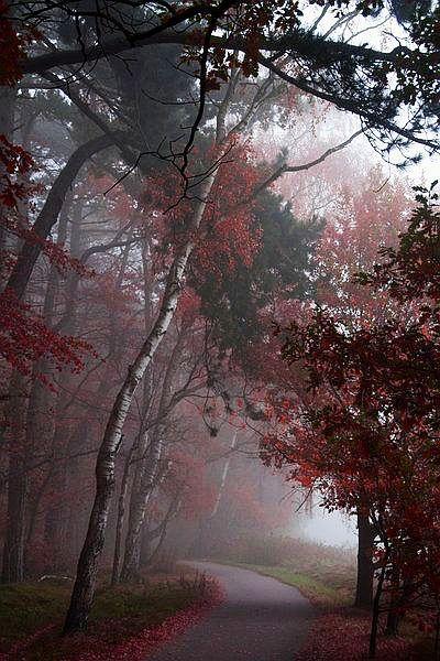 ✯ Misty Morning