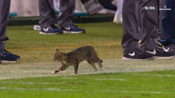 Excited Cat Invading Field Was The Highlight Of Dolphins Vs Ravens Game