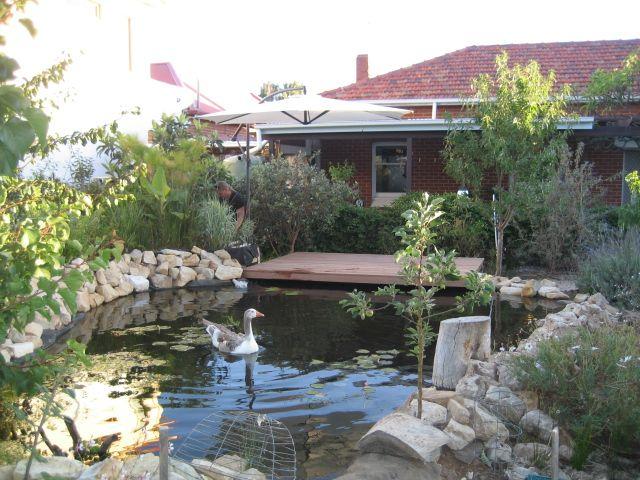 17 best images about aquaponics on pinterest aquaponics for Aquaponics pond