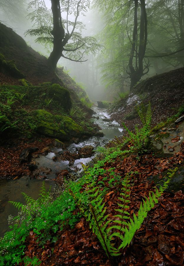 Mistic river | Flickr - Photo Sharing!