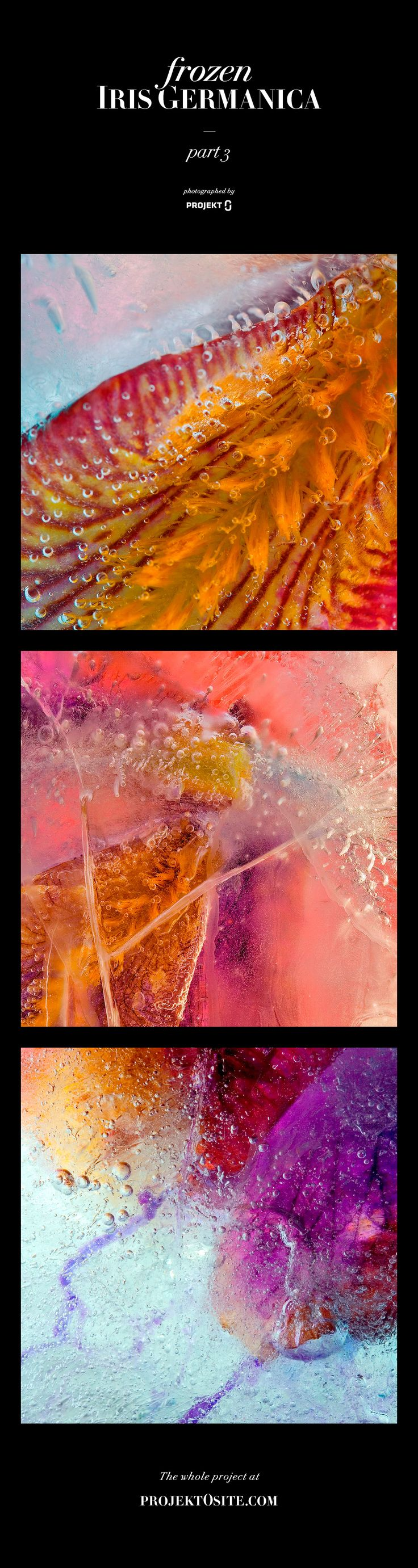 Series of macro photos. Petals of Iris Germanica were frozen and then created a beautiful colorful scenery of details. #macro #photography #flower