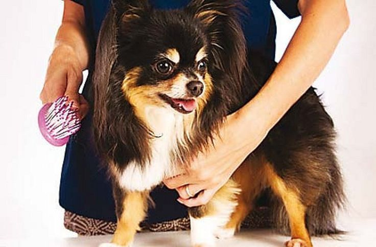 Ventajas de usar champú seco en nuestras mascotas, ¿será recomendable?