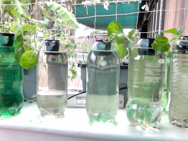 Mini Hydroponics A Collection Of Ideas To Try About Other 400 x 300