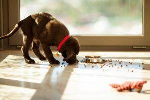 Karmy zbożowe vs. bezzbożowe Przemysł produkcji psich karm przeżył w ostatnich latach okres burzliwego rozwoju. Niektórzy twierdzą, że jesteśmy szczęściarzami, mając do dyspozycji tak szeroki asort…