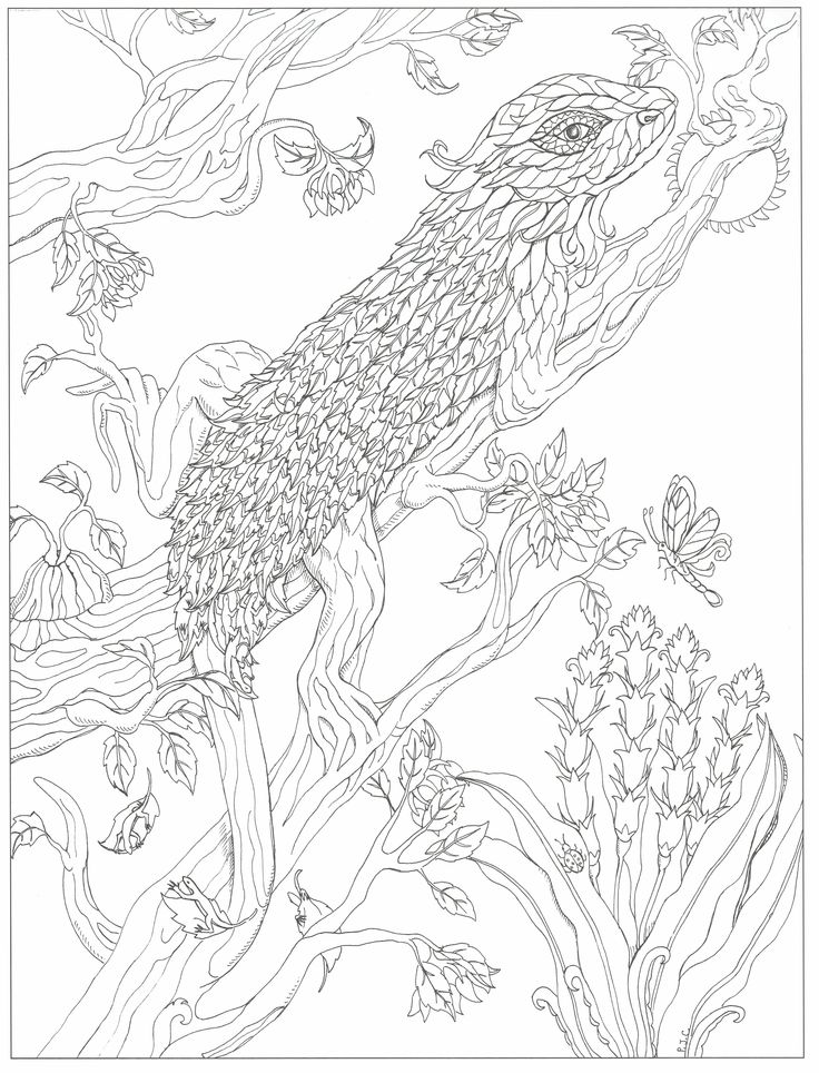 11x17 coloring pages - this will print on 11x17 just as nice as mod les
