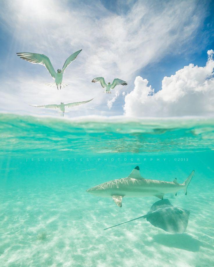 Photograph Bora Bora, Tahiti by Jesse Estes on 500px