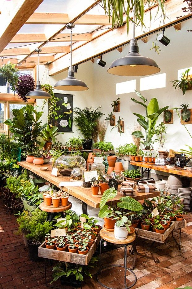 best 25 plant rooms ideas on pinterest indoor greenhouse garden shop near me and couple room. Black Bedroom Furniture Sets. Home Design Ideas