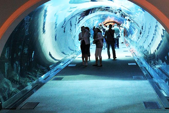World's Largest Shopping Mall Dubai with Aquarium and Underwater Zoo