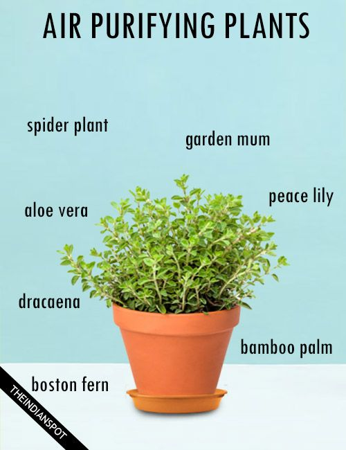 17 best images about healthy tips ideas on pinterest - Healthiest houseplants fresh air delight ...