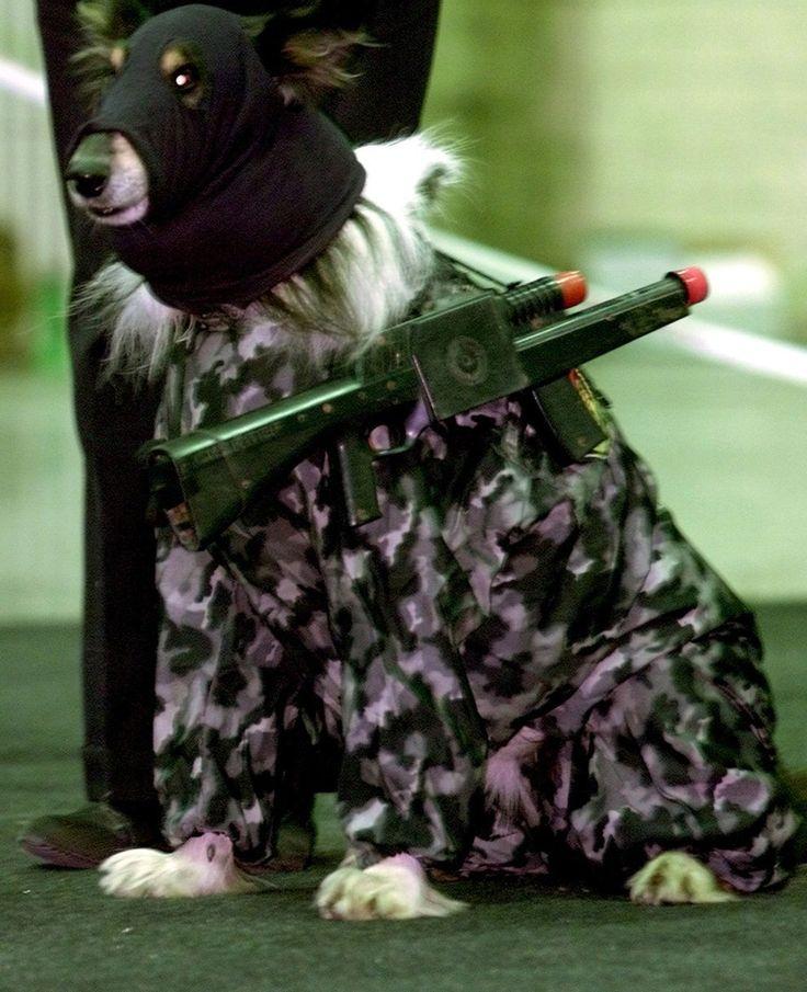 Картинки смешные, собаки в смешной одежде картинки