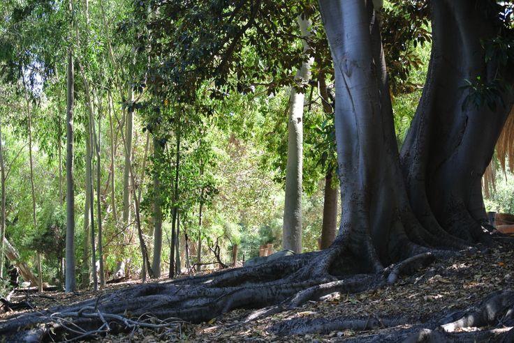 Perth Zoo - shade and sculpural