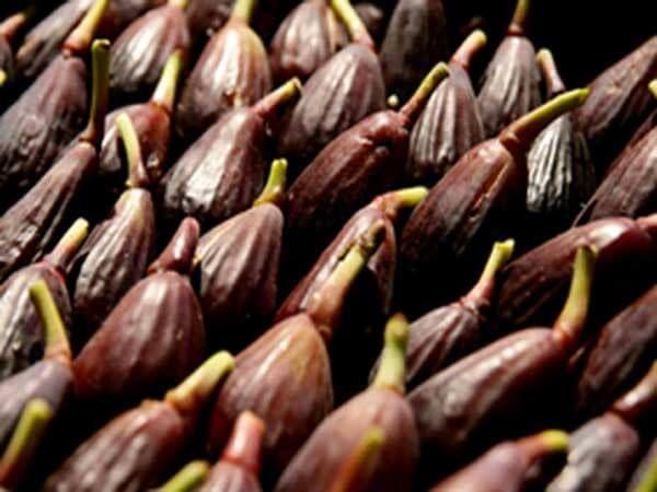 Zuccherino, fresco, dal sapore intenso e dal profumo potente. Sono tante le componenti dell'identità del FigoMoro da Caneva!