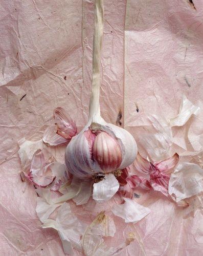 garlic love