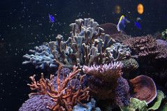 "Search ""rafa koralowa"" Free Photos & Stock Images - Foter"