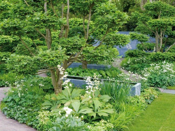 Immergrüne Bodendecker im schattigen Garten