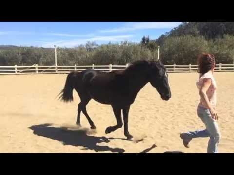 21 horse tricks. Clicker training. Liberty groundwork. Bareback and brid...