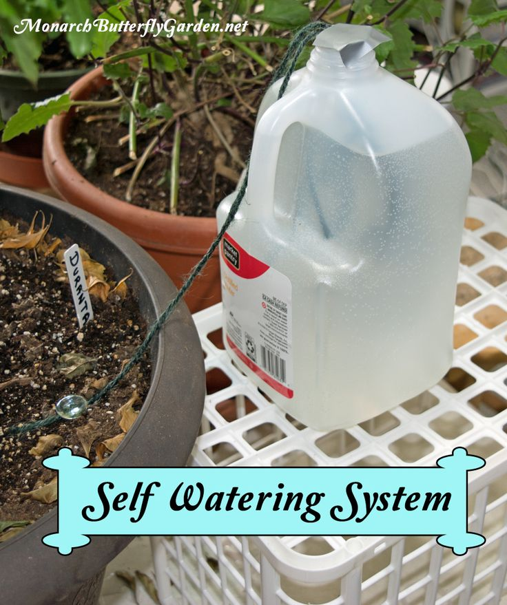 How To Care for Indoor House Plants While on Extended Vacation: Tip 3- Set up a Self Watering System