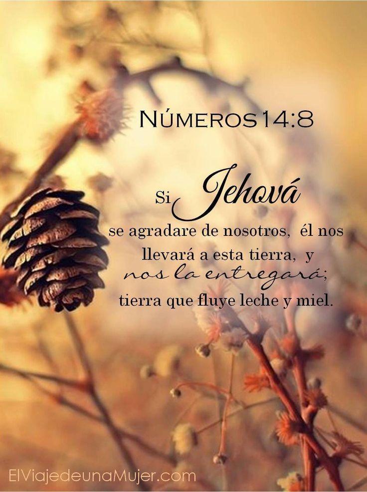 Números 14:8