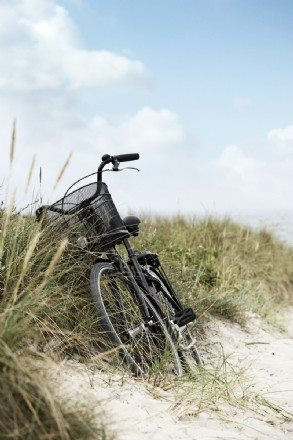 favorite mode of transportation: Beaches, Bike Rides, At The Beach, Beach Cruiser, Bicycle