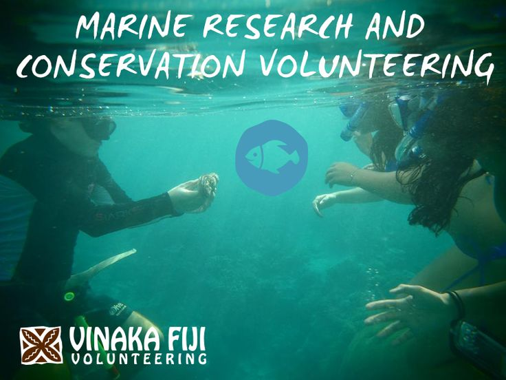 Make a #difference #diving in some of the world's most #colourful #reefs.Comprising over 300 #islands, 4,000 square miles of reefs and 1,500 #species of #sea #life, there are plenty of reasons to #volunteer on #Marine #Research and #Conservation #programs in #Fiji! Take the opportunity to #learn to #scuba #dive, or extend your skills in this #incredible #marine #environment of the #Yasawa #Islands.