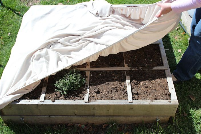 5 Unique Ways To Protect Your Plants From A Frost! http://wholelifestylenutrition.com