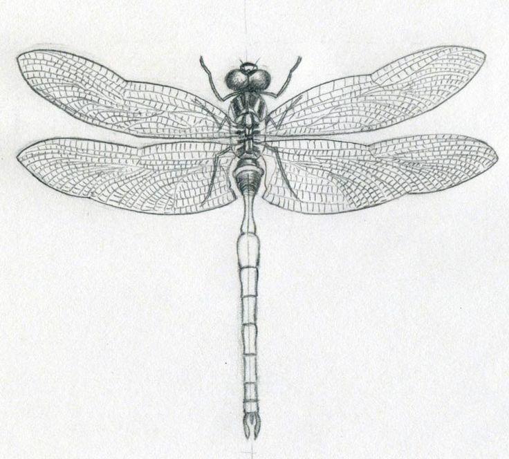 Asian Dragon Tattoo Sketch By Marinaalex On Deviantart: De 25+ Bedste Idéer Inden For Dragonfly Drawing På Pinterest