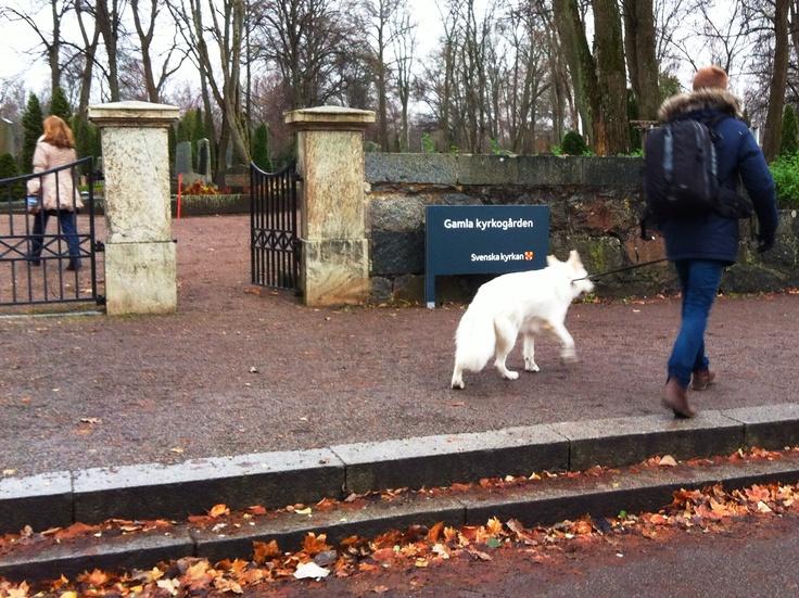Provskyltning vid Gamla kyrkogården, foto: Hampus Angelborg