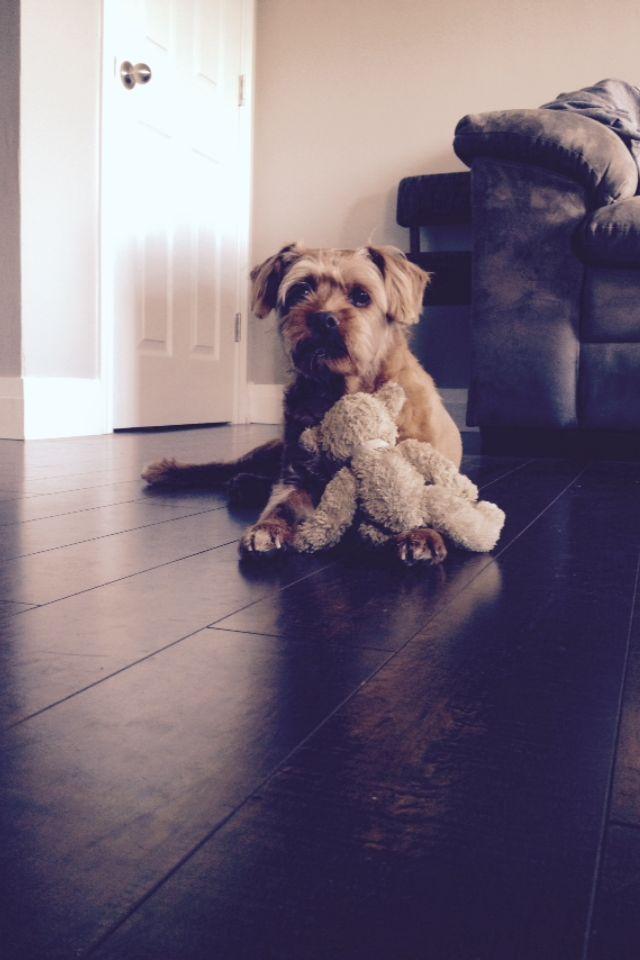 #Winnie #BronsonBeds www.bronsonbeds.com