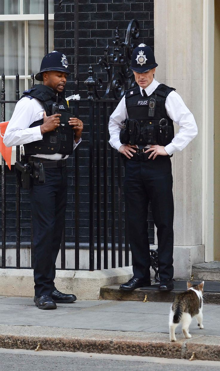 Downing Street, Larry's walking the streets!
