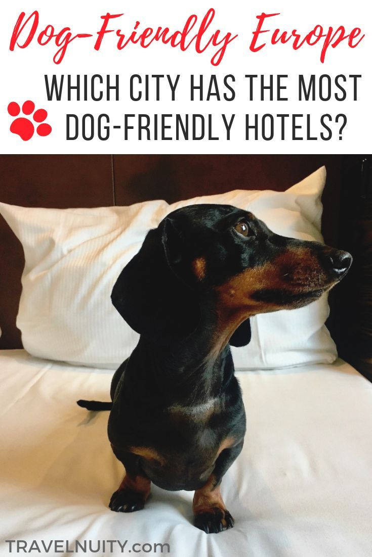 Which City Has The Most Pet Friendly Hotels In Europe Dog Friendly Hotels Pet Friendly Hotels Europe Travel Tips