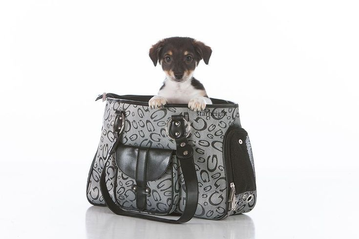 Dog Carriers For Airlines