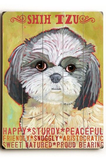17 Best Images About Shih Tzu Meme Dogs On Pinterest