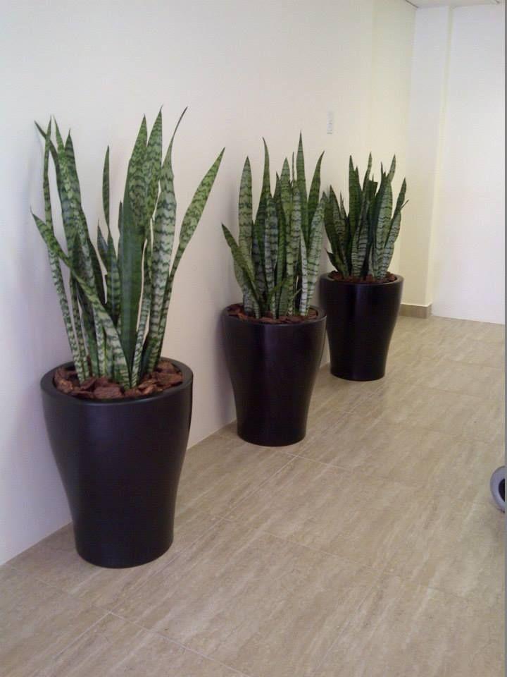 http://palmgrove.wix.com/indoorofficeplants#!gallery/c1zy6