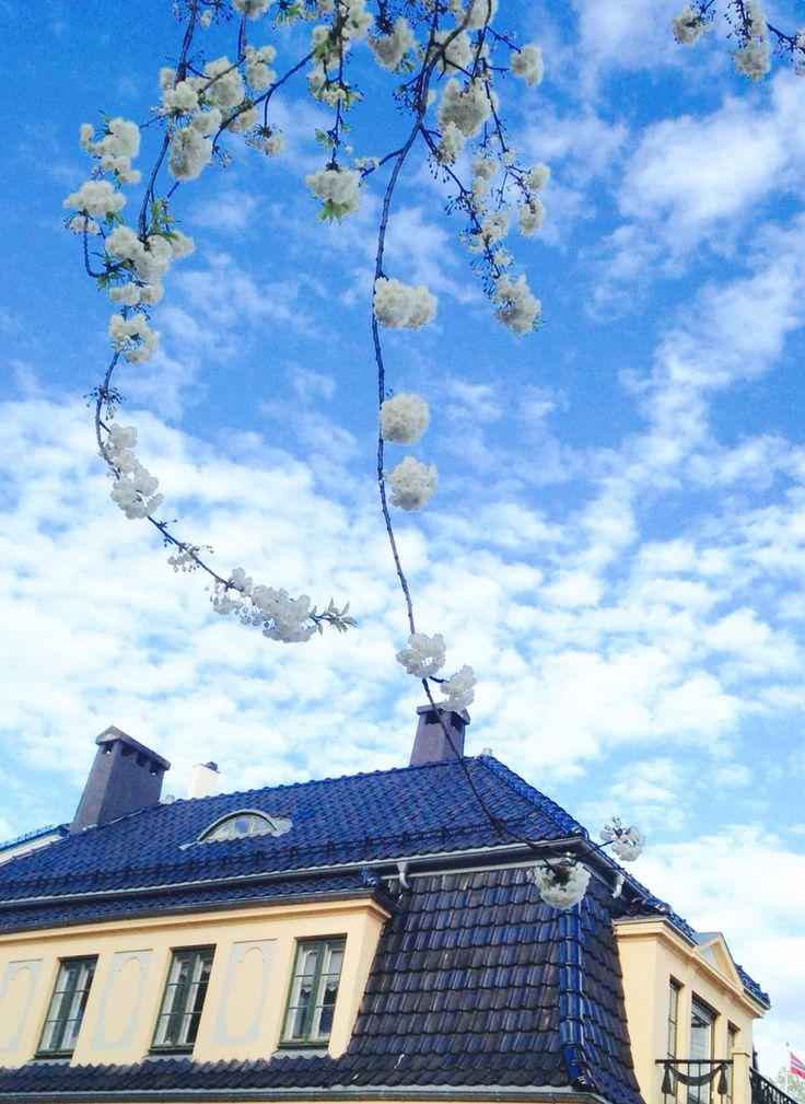 Oslo - spring