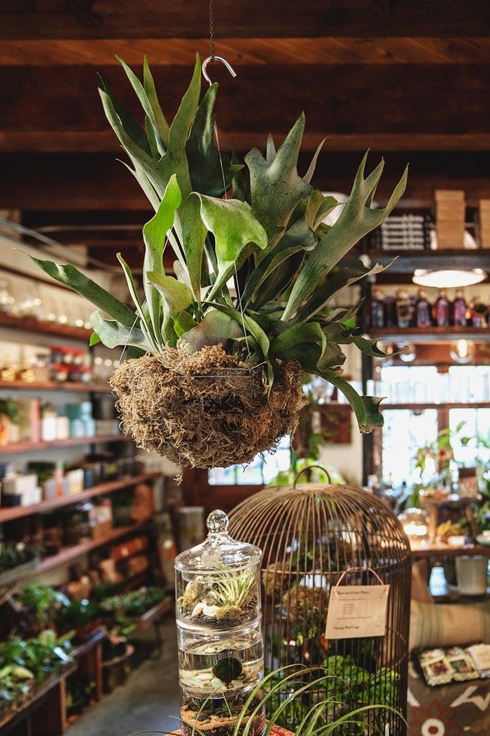 Mercantile - Terrarium Bar and More - Pistils Nursery