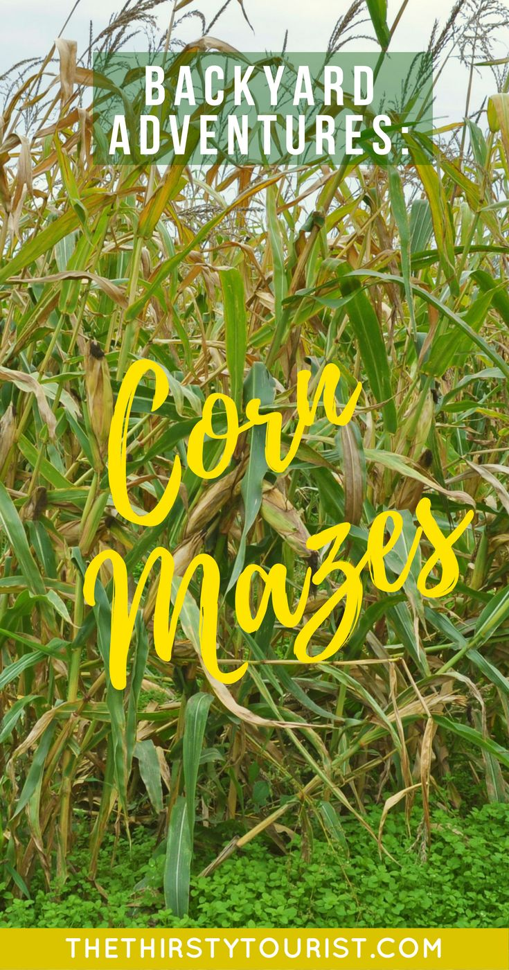 Budget Backyard Adventures: Corn Mazes... Be sure to follow The Thirsty Tourist for our best budget Backyard Adventures!