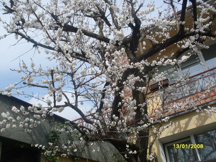 Kwiaty Moreli